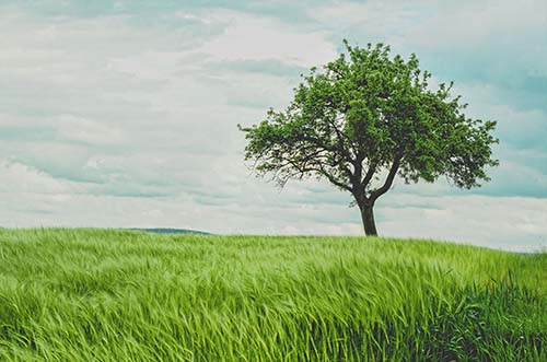 grass and tree on a cloudy day