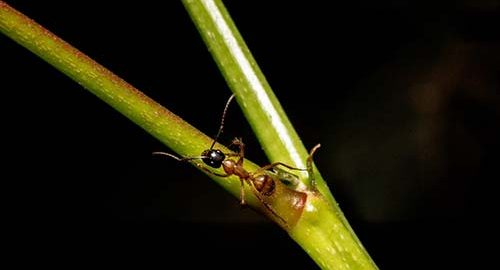 fire ant on the plant