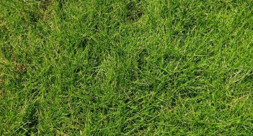 weeds on the grass