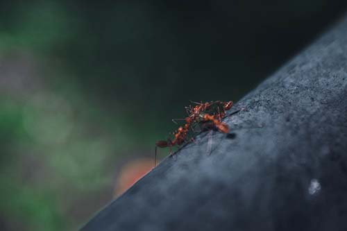 fire ant on the branch